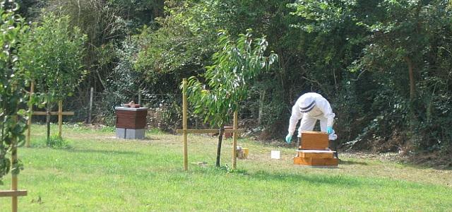Assembling a beehive