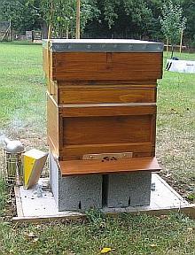 Red cedar National Beehives