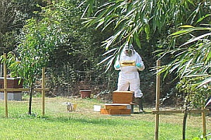 SW Beehives